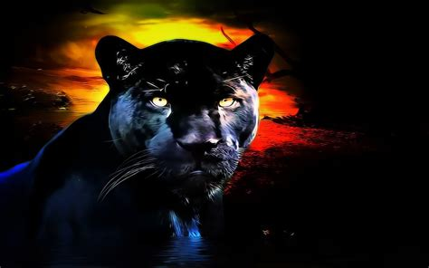 Black Panther Animal Hd Wallpaper - panther wallpaper and background 1280x800 id 256757