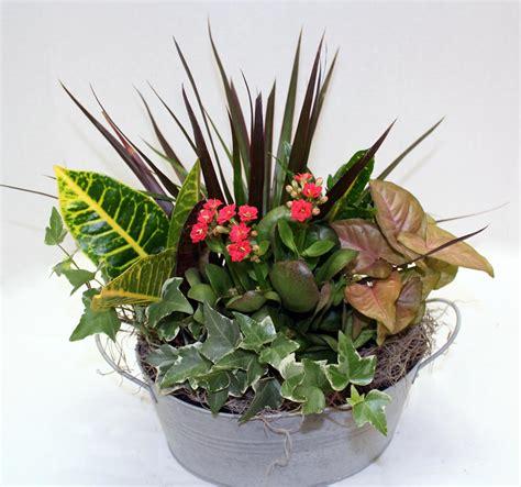 dg1003 10 quot dish garden johnson floral decorjohnson