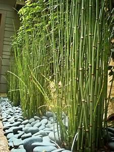 bambou et gros galets blancs amenagement jardin design With idee amenagement jardin paysager 1 haie de bambous une idee de plus en plus seduisante