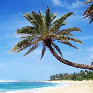 Palm Tree Beach Wallpaper iPad