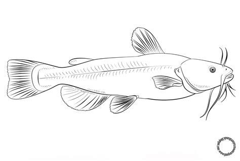 gambar mewarnai ikan lele