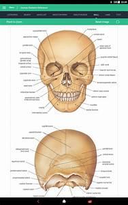 Human Skeleton Reference Guide