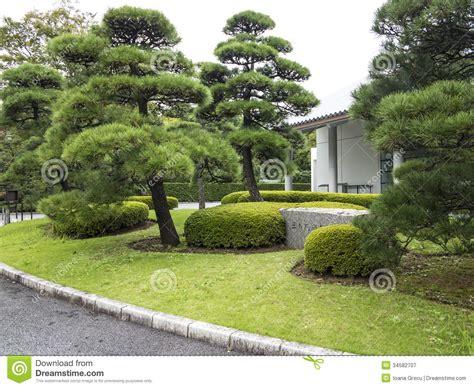 Kiefer Im Japanischen Garten Lizenzfreie Stockfotografie