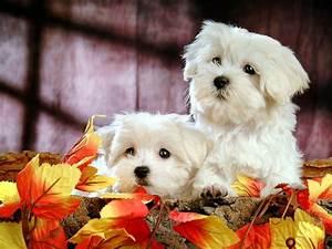 SUN SHINES: Lovely Little White Fluffy Puppy