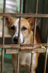 Sad Stray At Animal Shelter Stock Photo - Image of shelter ...