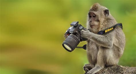 animals     photographers