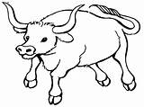 Ox Clipart Coloring Webstockreview Bull Pages sketch template