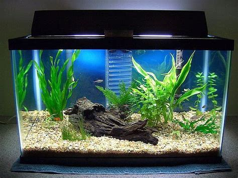 aquarium tank set up mine needs an make