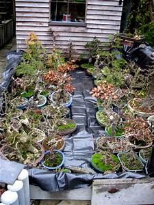 Dicke Vorhänge Kälteschutz : westerwald bonsai was gibts jetzt zu tun 2014 ~ Michelbontemps.com Haus und Dekorationen