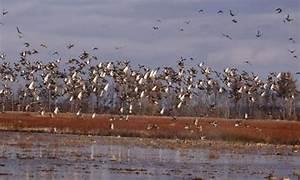 Arkansas Duck Guide Service