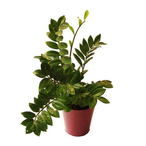 plante grasse d int 233 rieur photos de magnolisafleur