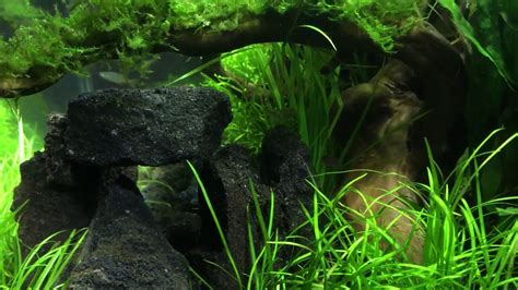 Fluval Aquascape by Fluval Flex 15 Gallon Aquascape 8 Weeks In
