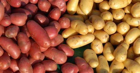 la pomme de terre quelle vari 233 t 233 pour quelle recette
