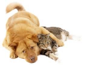 cat and dogs donate will county humane society