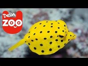Aquarium Fische Süßwasser Liste : die 5 komischsten fische feat top zehn youtube ~ Watch28wear.com Haus und Dekorationen