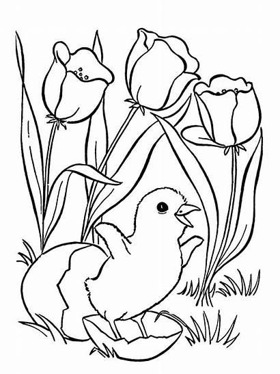 Coloring Pages Flowers Flower Chicken Dlya Bird