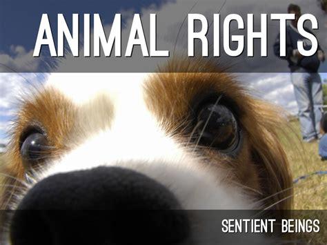 Animal Rights Wallpaper - animal rights by myriamcastilla