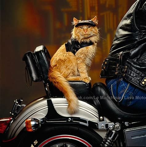 Pin By Regina Takahira On Harley Davidson Dogs And Cats