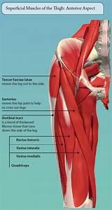 Of Lower Limb Muscle
