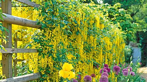Which Climbing Plants Are Best For Your Garden