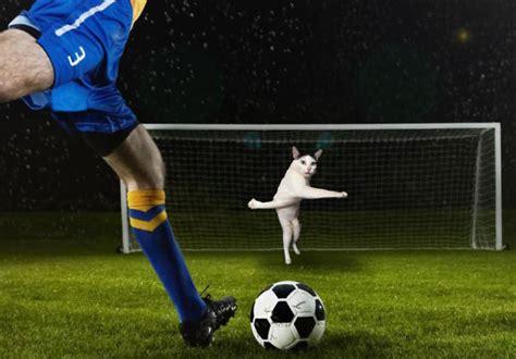 Wanita Mengandung Berapa Minggu Gambar Kucing Yang Diedit Membuatkan Permainan Bola Sepak