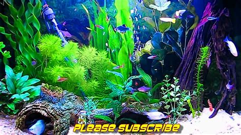 Free Animated Fish Wallpaper Windows 7 - aquarium background windows 7 animated aquarium