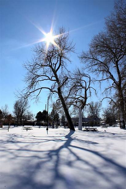 Snow Sun Winter Tree Shadows Domain Resolution