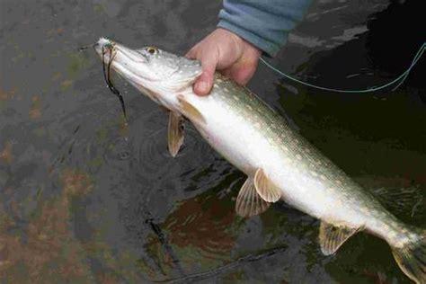 peut on encore manger les poissons de nos rivi 232 res le de tair