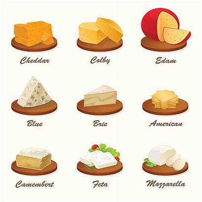 Cheese Different Kinds Board Vector Cutting Illustration