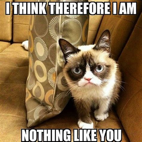 Best Of Grumpy Cat Meme - best grumpy cat memes www pixshark com images galleries with a bite