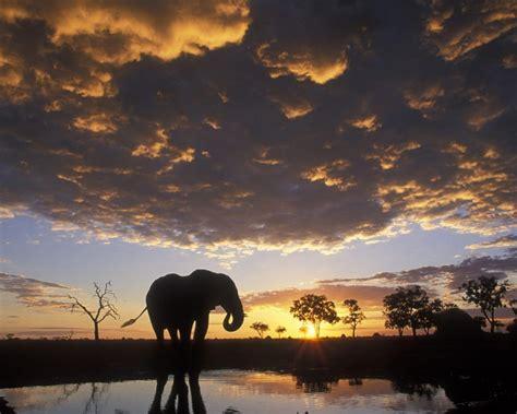 elefante al atardecer  fondos de pantalla