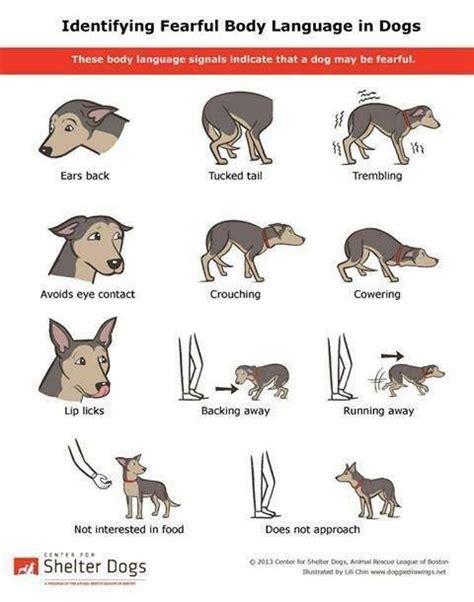 realistic foxes  cartoon fox drawing
