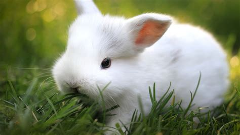 cute white baby rabbit pictures rabbits litle pups