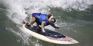 Planche De Surf Electrique : le surf lectrique ~ Preciouscoupons.com Idées de Décoration