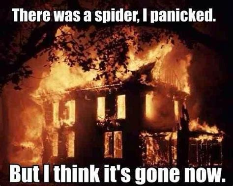 I Saw A Spider Meme - there was a spider i panicked imghumour