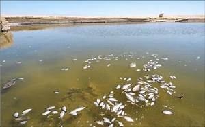 Acid Rain Cause Damage To Fish