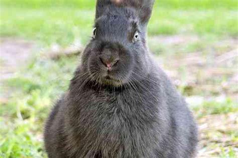 Come Costruire Gabbie Per Conigli by Come Costruire Una Gabbia Per Conigli Donnad