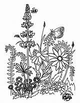 Wildflower Jamboree Virtual Spring Paintable Template sketch template