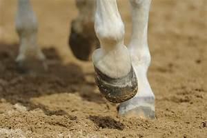 Hot Topics In Hoof Care  Part 1  Horse Hoof Biomechanics