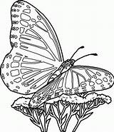 Coloring Butterflies Pages Butterfly Printable sketch template