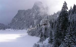 High Forest Snow & House wallpapers