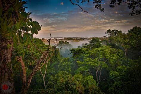 earth rainforests california academy  sciences