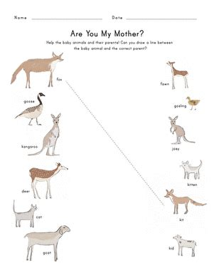 baby animals names worksheet education com