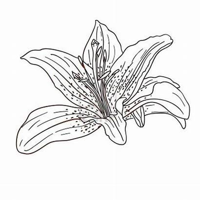 Tropical Flower Flowers Drawing Coloring Pages Exotic