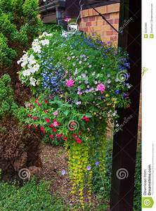 Hanging Basket Of Colorful Flowers In Full Bloom Stock