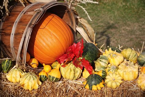 fall harvest  stock photo public domain pictures