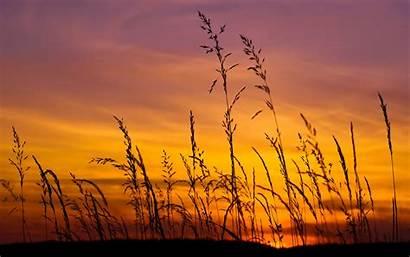 Barley Sunset 4k Wallpapers