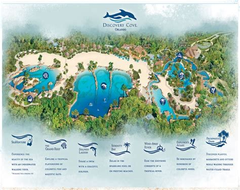 Discovery Cove Orlando Tickets by Discovery Cove Orlando Theme Park Best Discount Dolphin