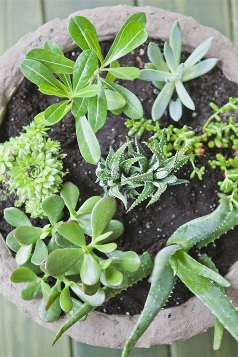grow your own succulents growing your own succulent garden succulent south