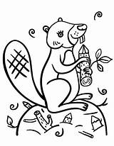 Beaver Coloring Pages Printable Coloringcafe Beavers Scouts Pdf Animal Sheet Nature Sheets Printables Button Prints Standard Below sketch template